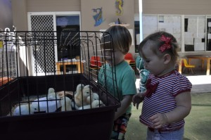 Chicken Hatching at Little Miracles Caringbah