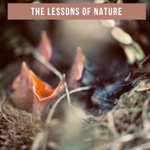 The Lessons of Nature
